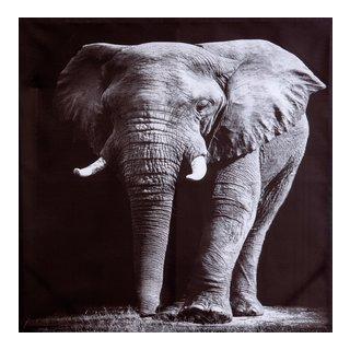 CANVAS ELEPHANT 78X78-BIL3058