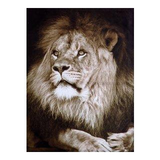 CANVAS LIONS 80X60-BIL3059