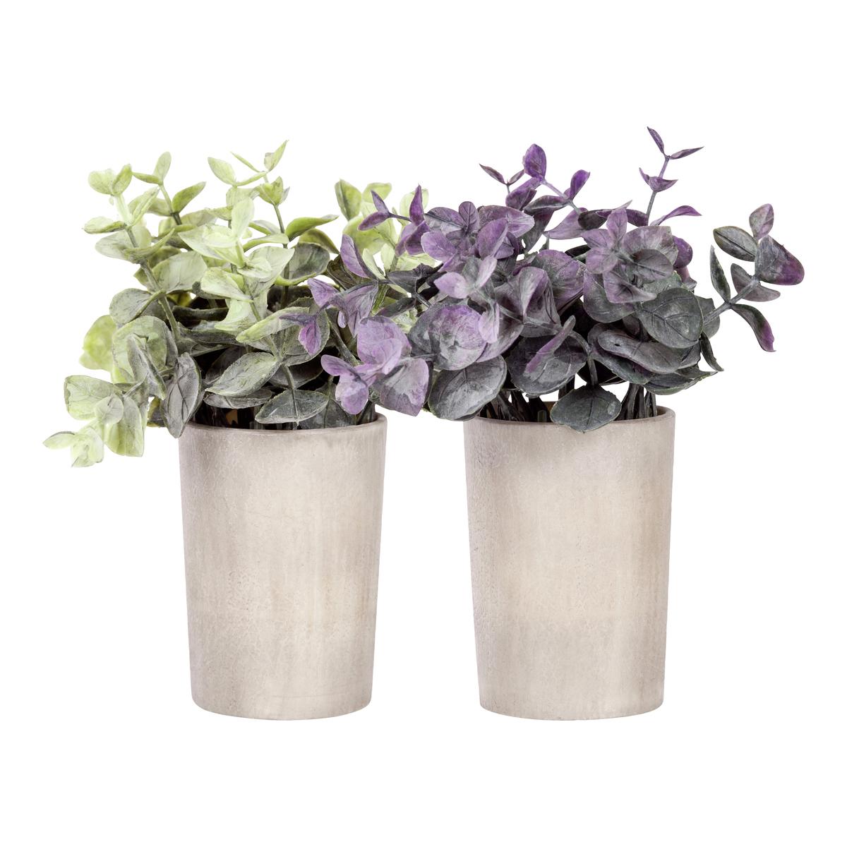Miniplante