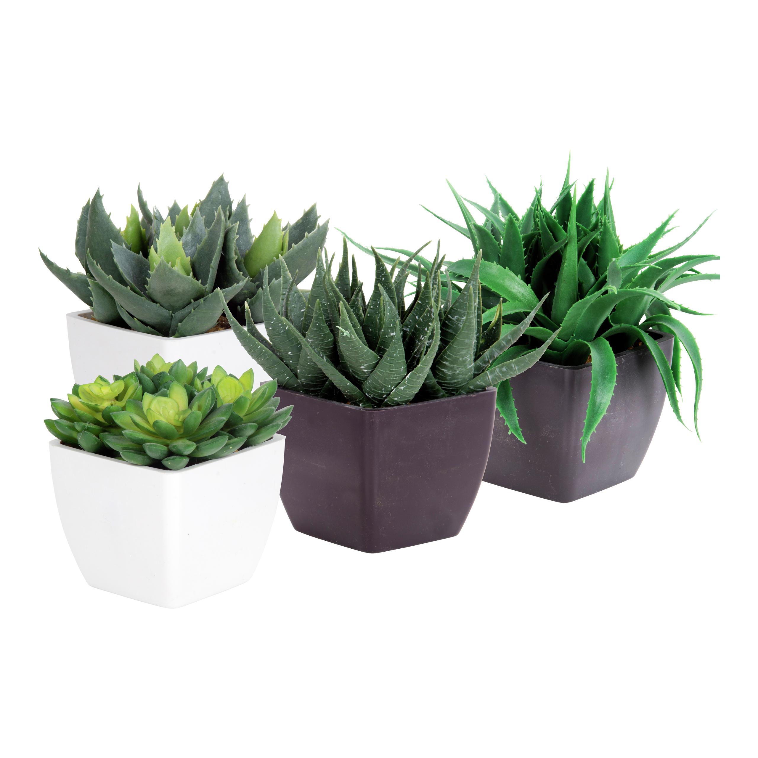 Succulent-BLO1022