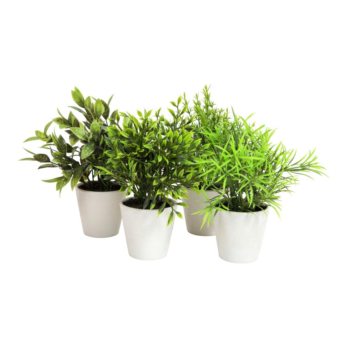 Grønne vekster i potte-BLO1310