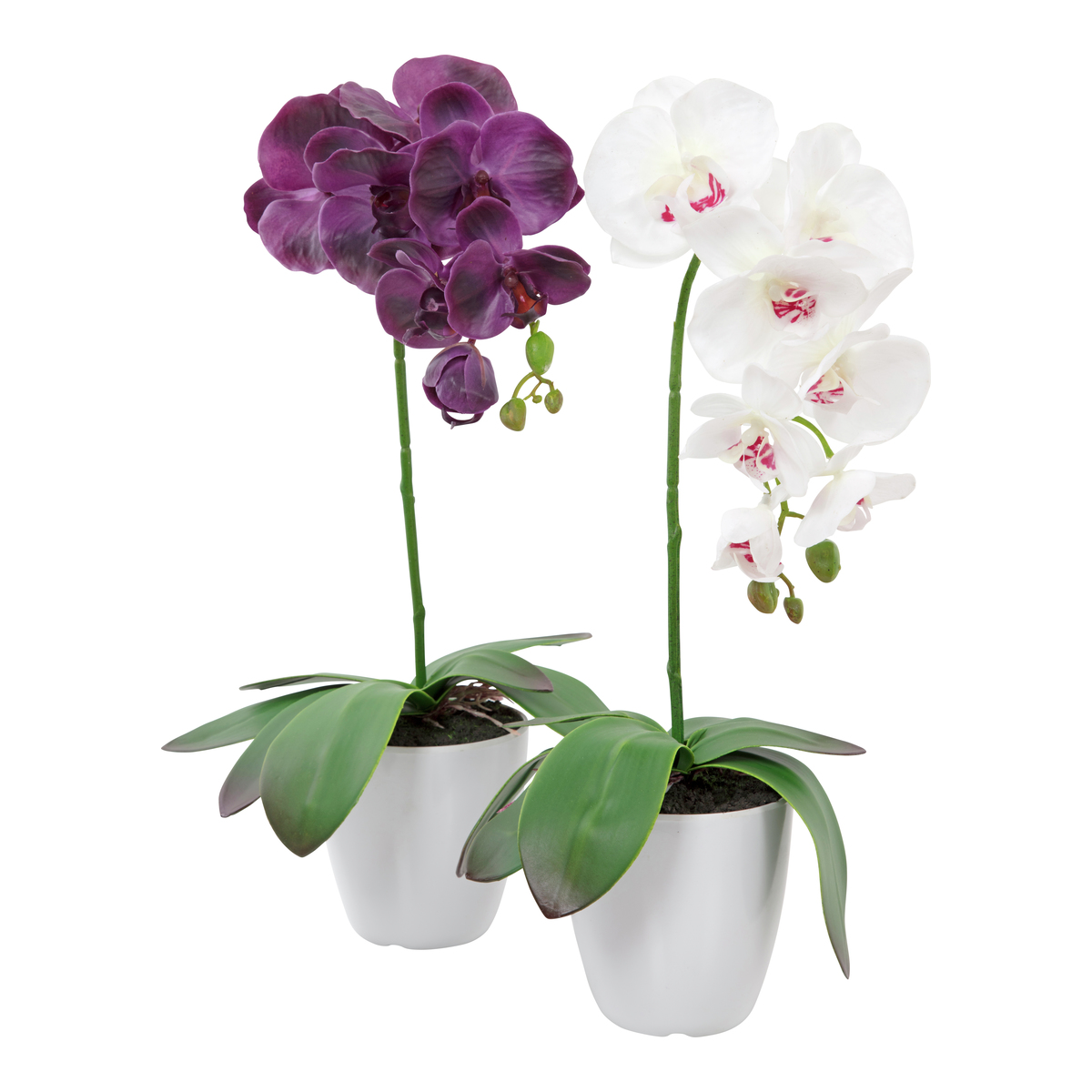 Orkide i potte-BLO1980