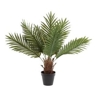 Palm i kruka