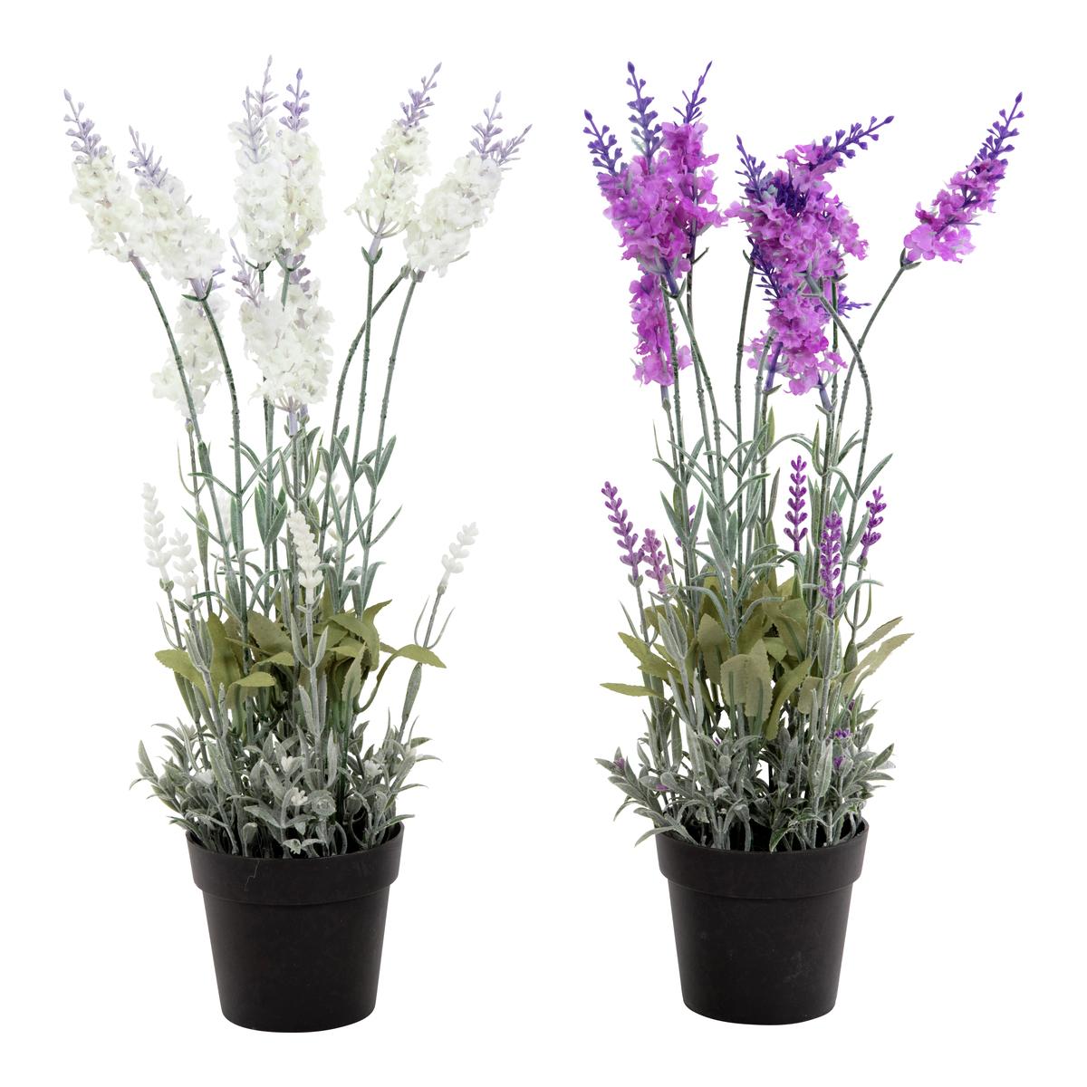 Lavendel i potte