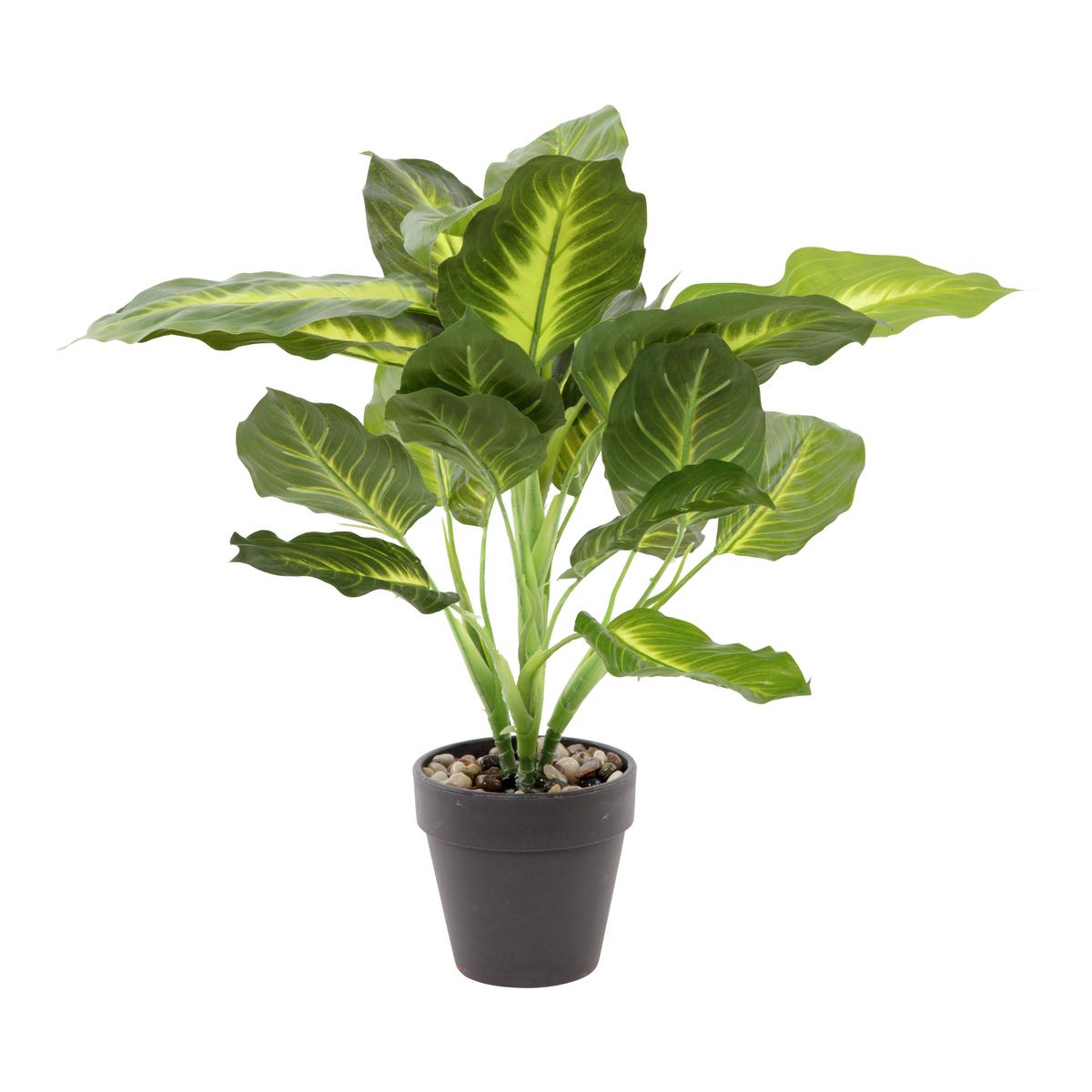 Grønn plante i potte 50cm
