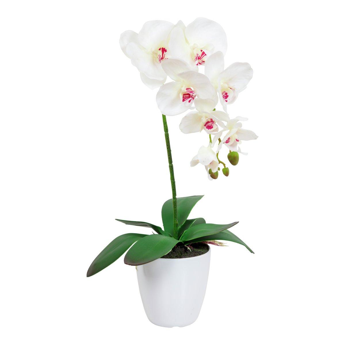 Orkide i potte-BLO1992