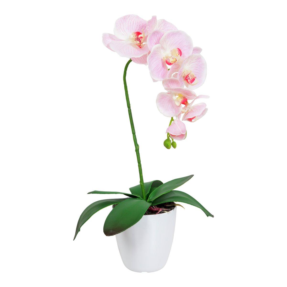Orkide i potte-BLO1994