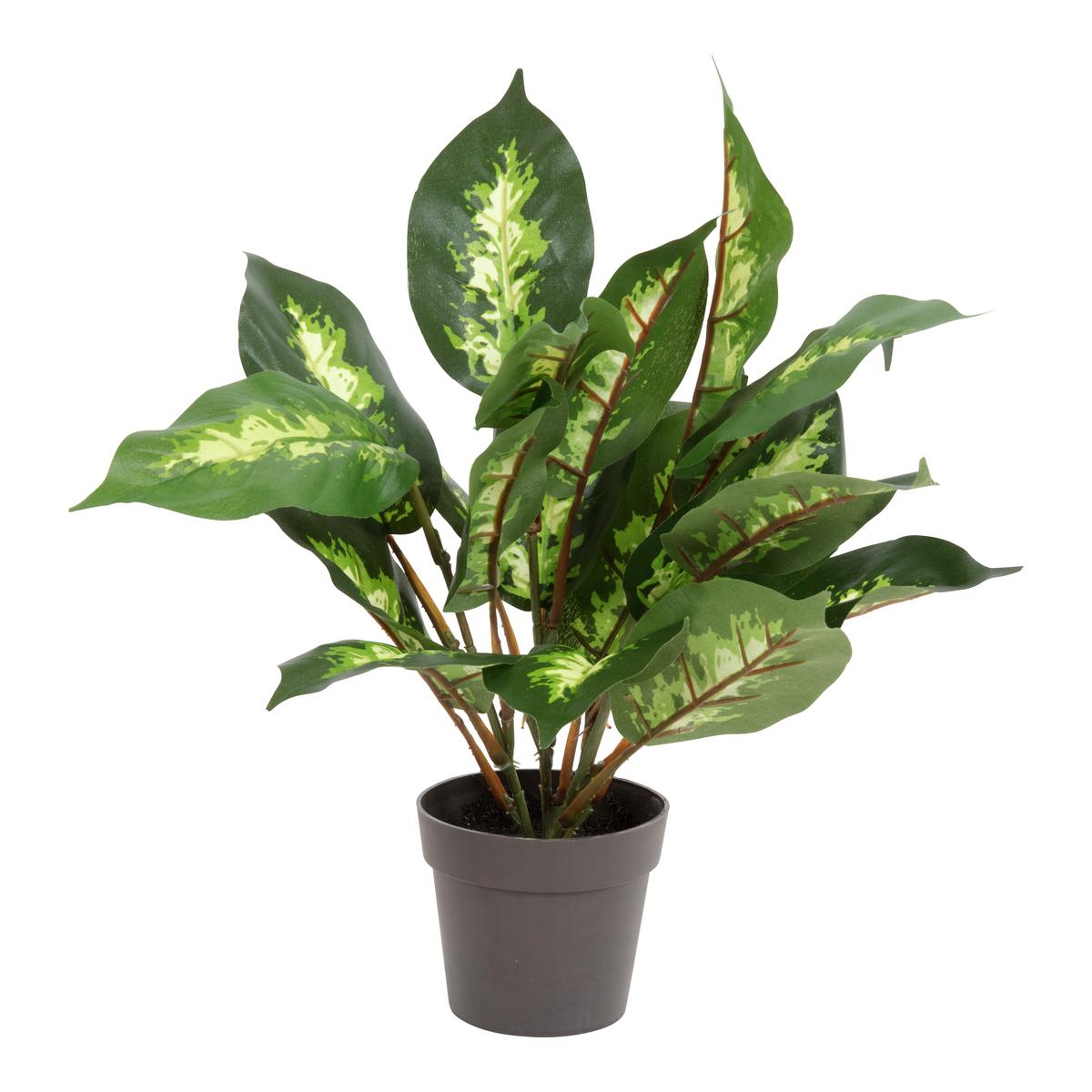 Grønn plante i potte-BLO1995