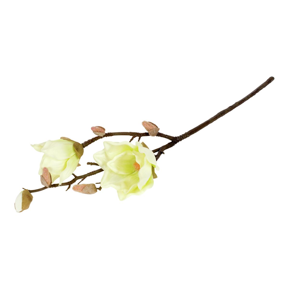 Magnolia-BLO2015