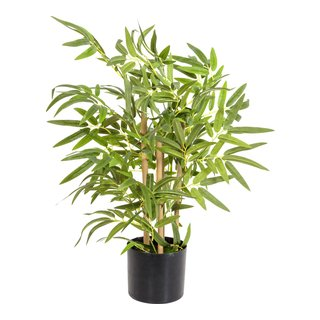 Bambusplante-BLO2032